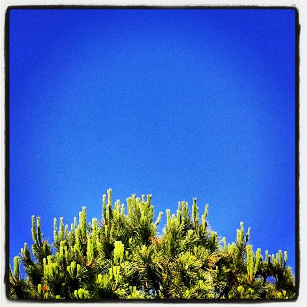 Guarda in alto e prendi fiato #bleuciel