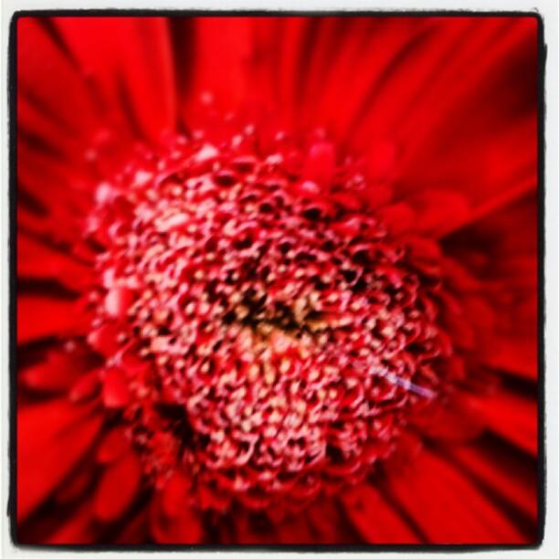 Molto rosso, incredibilmente vicino #colori