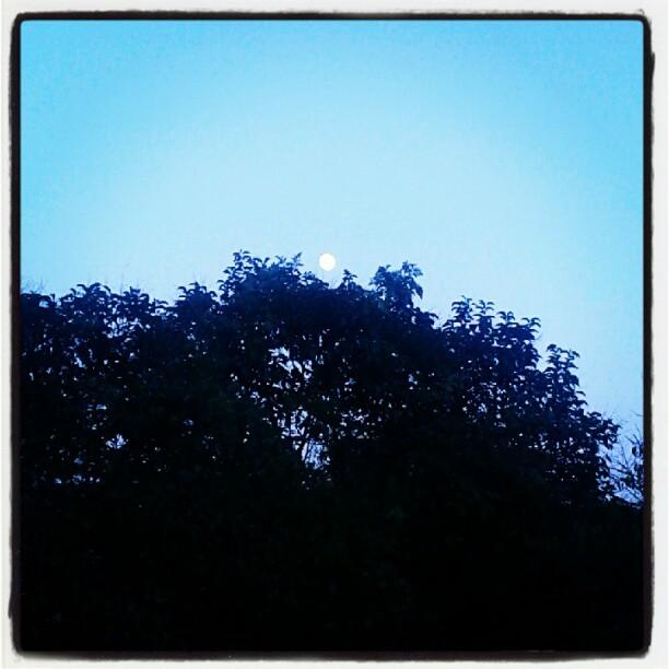 Nel mentre la luna era spuntata sopra le chiome degli alberi...