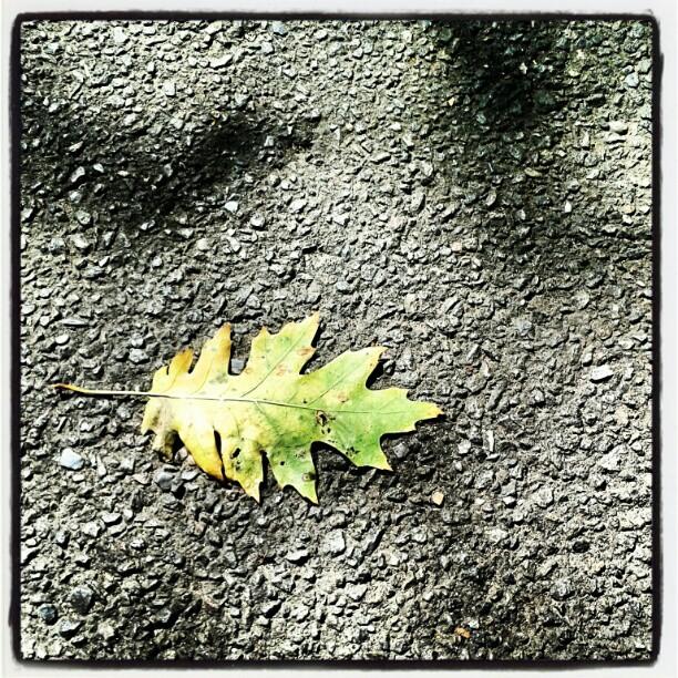 Falling leaves... per siccità e non perché siamo in #autunno