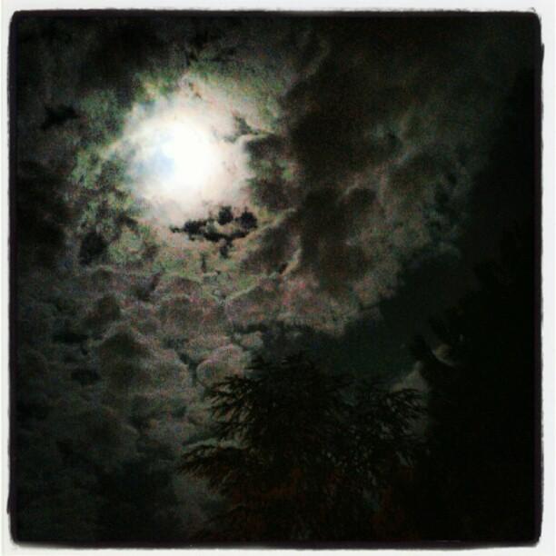 Luna piena in arida estate su cedro del libano