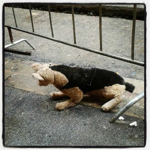 Come un cane di pezza abbandonato sotto la pioggia #hardtimes