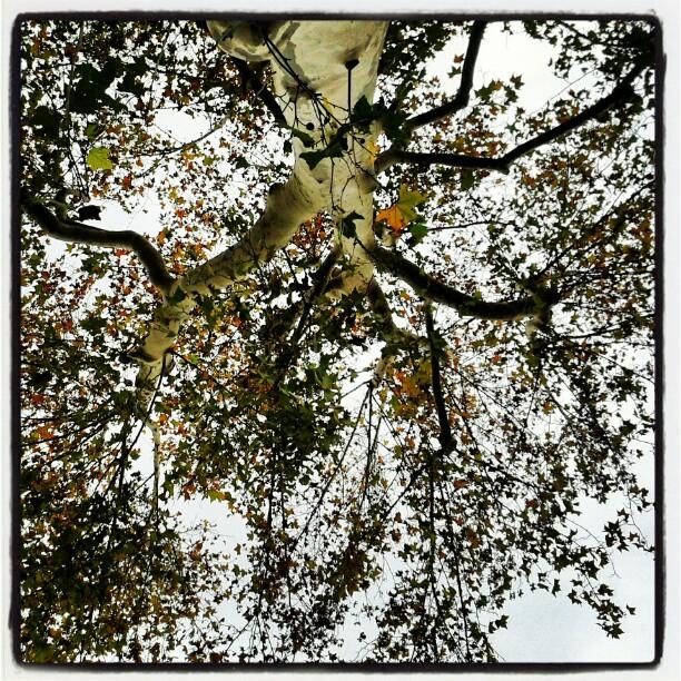 Guarda in alto e prendi fiato... #hardtimes